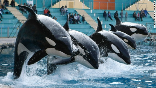Photos: Killer whales in captivity