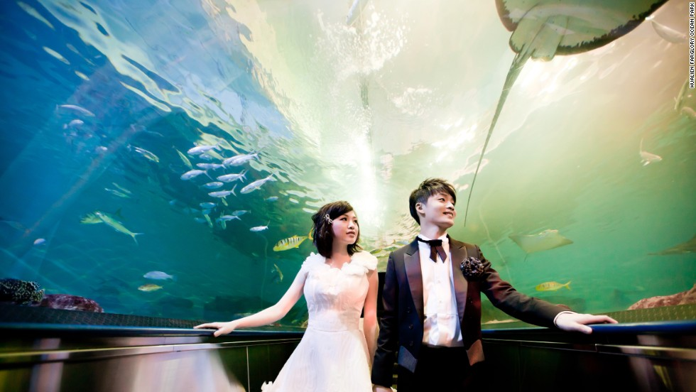 Visitors to Taiwan's Hualien Farglory Ocean Park can travel through the aquarium on an undulating airtight escalator as sharks, rays and other creatures swim above their heads.