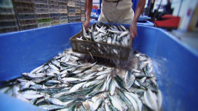 Fish industry benefits from recession?