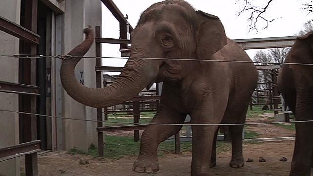 Elephant kills zookeeper