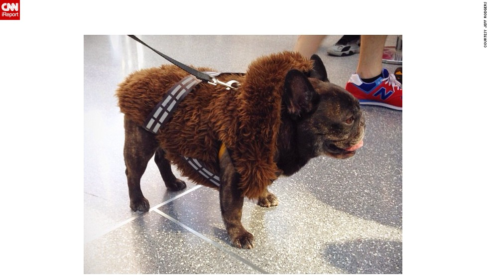 "Even canines get into the action. This dog is cosplaying as <a href=""http://instagram.com/p/famXTSiDH8/"" target=""_blank"">Chewbacca</a> from ""Star Wars."""