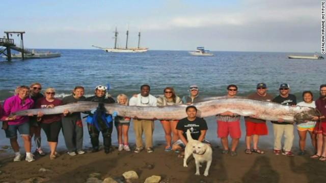 dnt oarfish find california_00000502.jpg