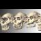 04 ancient skulls 1017
