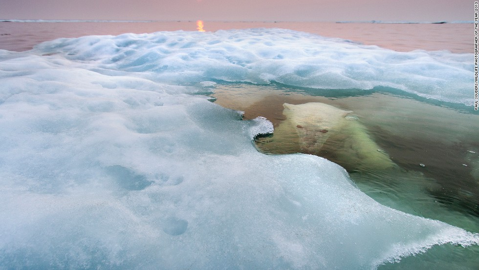 <strong>The water bear </strong><br />by Paul Souders (United States)<br /><em><br />photo courtesy </em><em>Paul Souders/</em><em>Wildlife Photographer of the Year 2013</em>