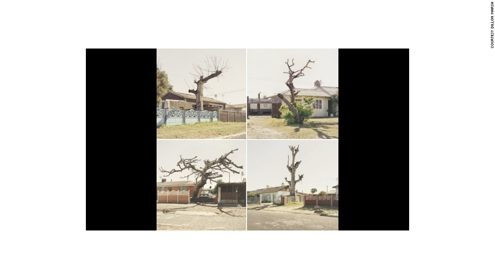 "This image by Dillon Marsh is from a series of photographs called ""Limbo,"" which shows trees in the Cape Flats that have died, but not yet fallen. The Cape Flats is a poor area east of central Cape Town, home to a large percentage of the city's population."