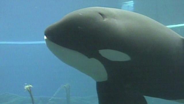 pkg savidge free willy keiko killer whale_00010026.jpg