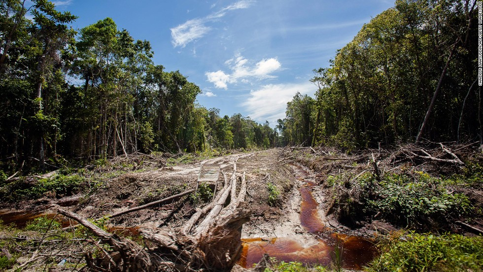 An access road is constructed in a peatland forest that's being cleared for a palm oil plantation in Indonesia's Aceh province in September.