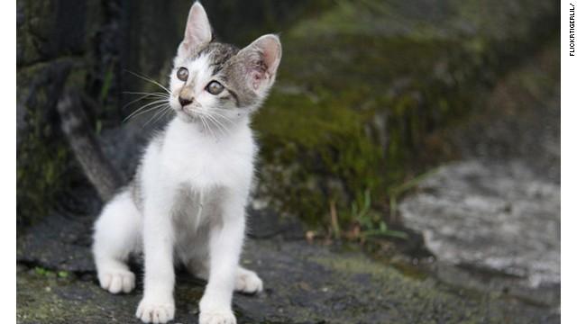 One of Houtong's poseur felines.