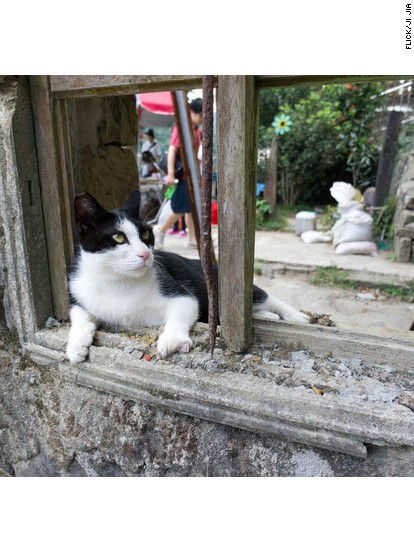 5 places where cats outshine tourist attractions