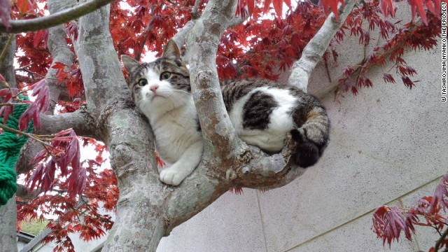 Relax, kitty. Dogs are banned on Tashirojima.
