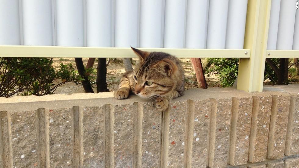 Japan's second feline island is a popular birdwatching spot.