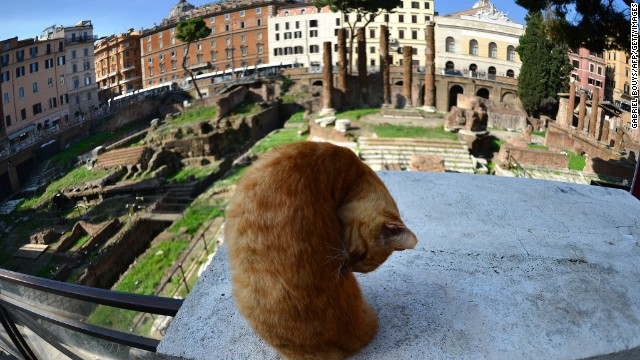 The cats have got Rome licked.