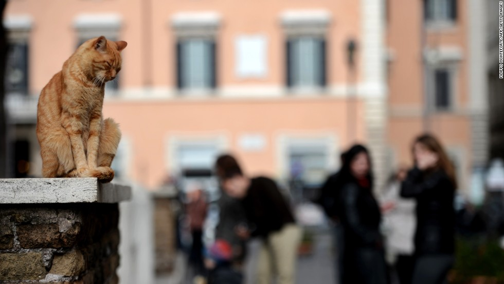The Italian capital has countless thrilling historic sites, but to get people really interested throw in a cat or two.