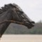 black caviar statue 1
