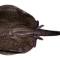 10Amazon Species 1025