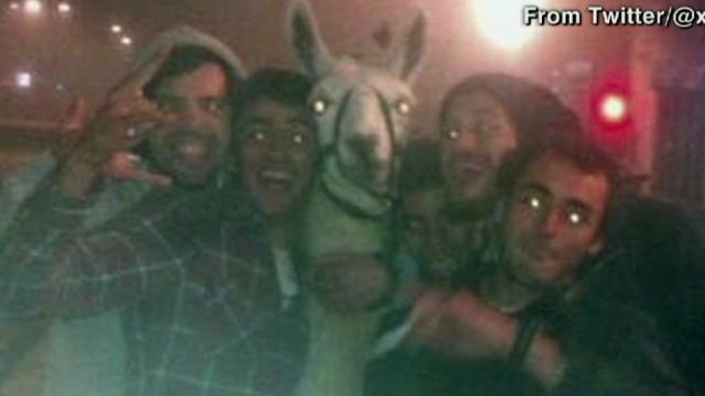 exp newday mclaughlin llama stolen_00004401.jpg