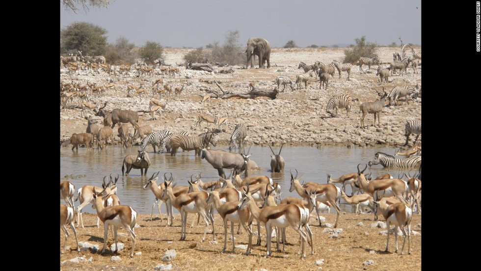 Etosha National Park is the best place in Africa to see wildlife, says Dinets, especially if you have kids.