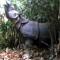 04 endangered species RESTRICTED