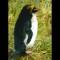 09 endangered species