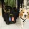 atl24 beagle