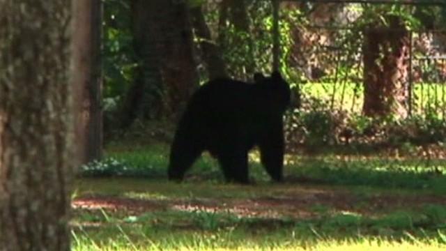 pkg bear crashes backyard birthday party _00000908.jpg