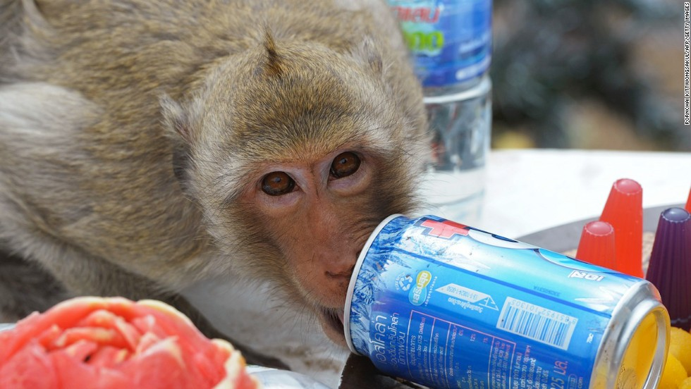 And you thought monkeys were hyperactive already. Wait till you see them hopped up on caffeine. Not a pretty sight, we assure you.