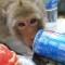 03 Lopburi Monkey Buffet