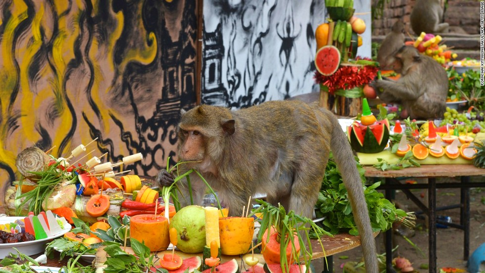 The Thai version of the Ramayana legend claims that Rama created the ancient city of Lopburi with the help of his friend Hanuman the Monkey King. Many of Lopburi's residents consider the macaques descendants of Hanuman, hence this monkey feast is held in their honor -- and to promote tourism.