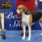 02.national-dogshow-RESTRICTED