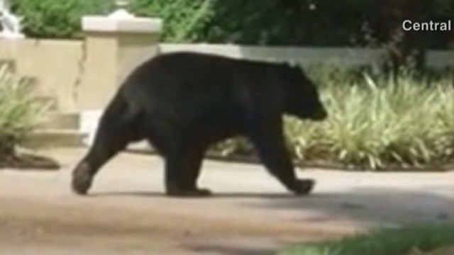 Bear mauls woman in her neighborhood