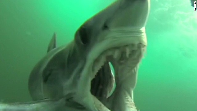 See mako shark attack GoPro fish rig