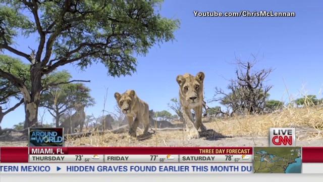 exp atw holmes lion robot camera_00001818.jpg