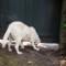 charleston dog 5