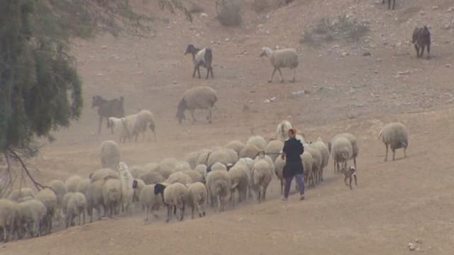 Israel's Bedouin relocation plan