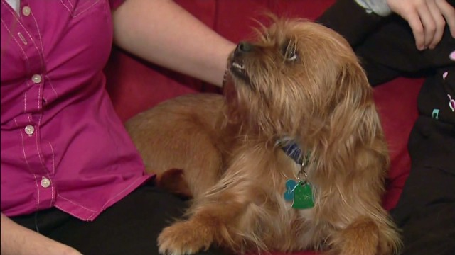 Cancer patient reunites with lost dog
