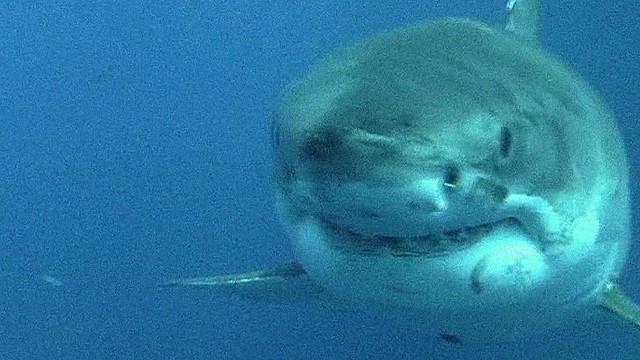 we.swim.with.sharks.orig_00000108.jpg