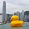 outrageous travel stories of 2013-duck