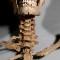 stonehenge skeleton