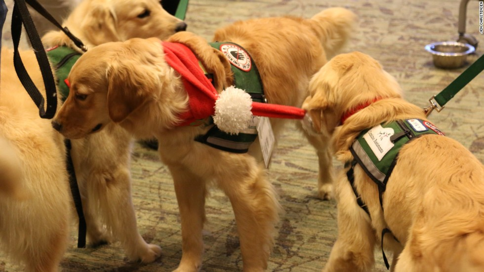 CanineAssistants, an Alpharetta, Georgia-based nonprofit group, brings therapy dogs-in-training to help Emory University students with finals stress.