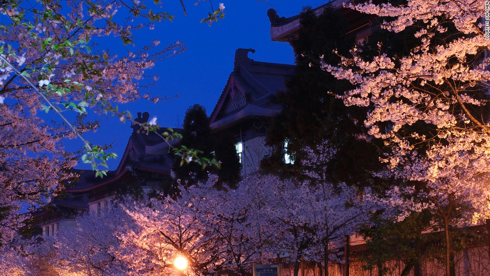 """One of the best places to see cherry blossoms is the historic Jiming Temple and the Examination Hall, which was built during the Minguo (Republic of China) era,"" says Sun.<br />Nanjing Forestry University, Xuewu Lake and Lovers' Garden are other good places to see cherry blossoms."