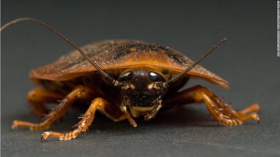 "<strong>Cockroaches:</strong> Words spoken by Senate Majority Leader Harry Reid: ""Congress is finishing this year less popular than a cockroach."" A polling question actually asked people if they have a higher opinion of Congress or cockroaches. And <a href=""http://www.publicpolicypolling.com/main/2013/01/congress-less-popular-than-cockroaches-traffic-jams.html"" target=""_blank"">people thought higher of cockroaches</a>."