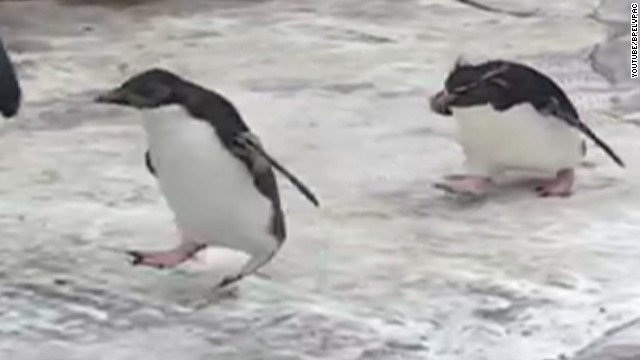 orig distraction penguins chase butterfly_00001506.jpg