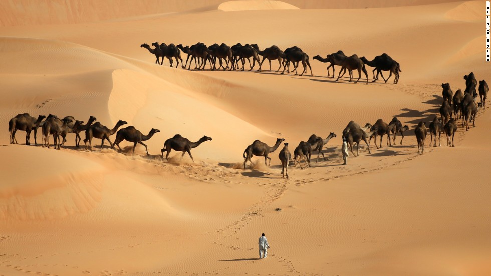 <strong>December 22:</strong> Camels walk along sand dunes in desert during the Mazayin Dhafra Camel Festival in Abu Dhabi.