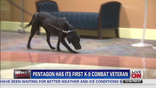 exp pentagon dog_00003208.jpg
