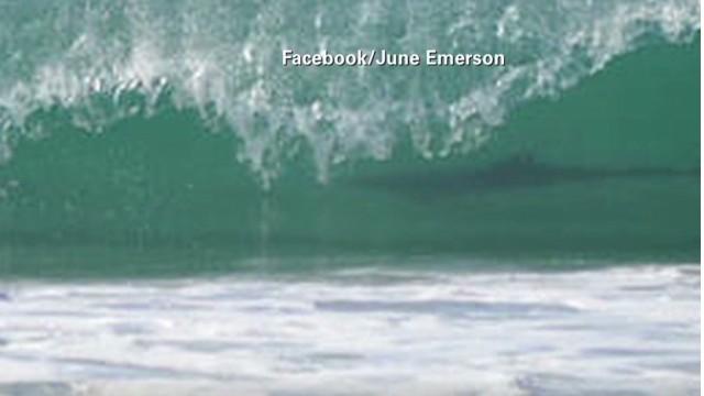 nr.brooke.beach.photo.shark.wave_00001714.jpg