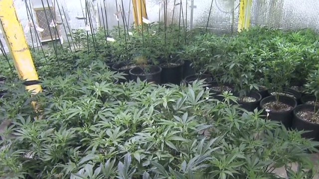 Will Colorado see teen pot problems?