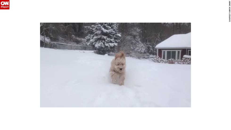 "<a href=""http://ireport.cnn.com/docs/DOC-1072214"">Karsh Sahay's</a> goldendoodle puppy was beside himself when he ran out into the snow in Glen Head, New York, an area that had more than 10 inches of snowfall on January 2."