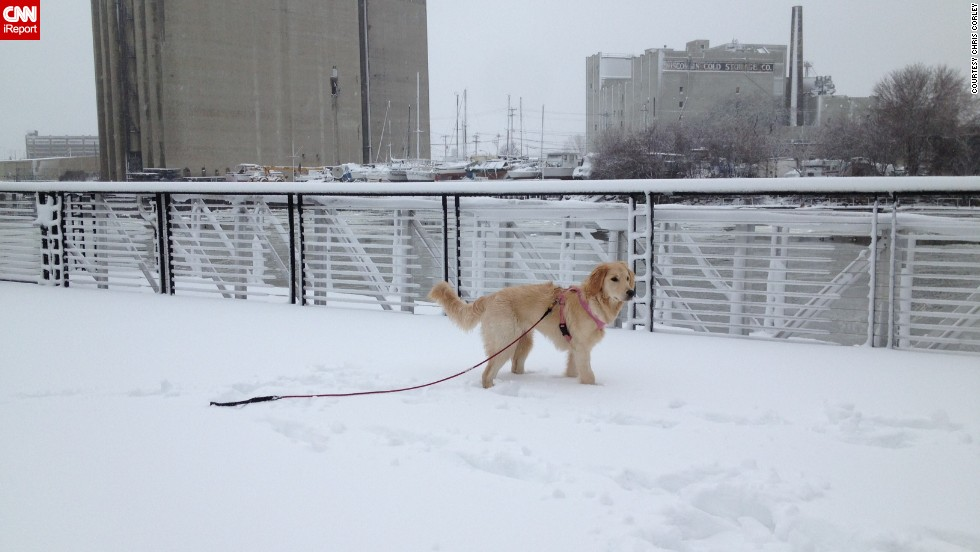 "<a href=""https://twitter.com/CorleyRealEst8/status/419528955230560256"" target=""_blank"">Chris Corley </a>says his sugar doodle Lily can't get enough of this cold weather. Here she is walking around in downtown Milwaukee on Friday after some fresh powder fell in the area. ""She loves the snow. I am Canadian and thought I liked snow. We are a perfect match,"" he said."