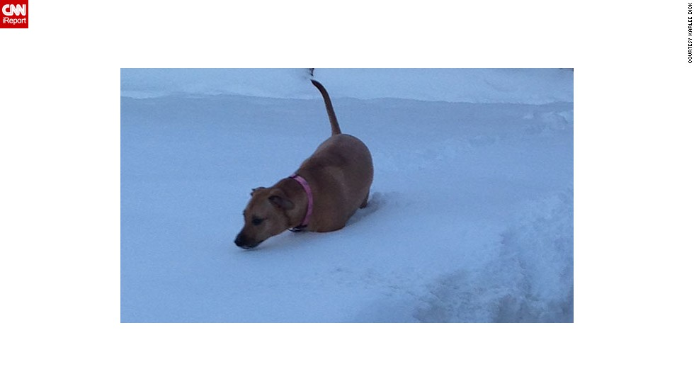 """When <a href=""""https://twitter.com/Karkeys719/status/419528169339625473"""" target=""""_blank"""">Karlee Dick's</a> pup Jayden first saw the snow outside their home in Glendale Heights, Illinois, she was frightened. """"She was scared and barked at it, but now she jumps in it and loves to bury her toys under the snow,"""" she said."""