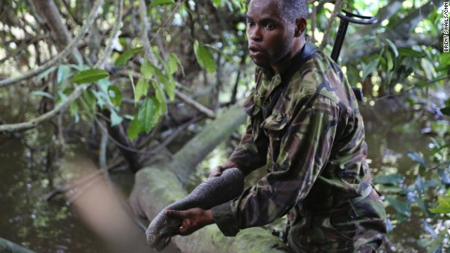 The challenges of fighting ivory poachers